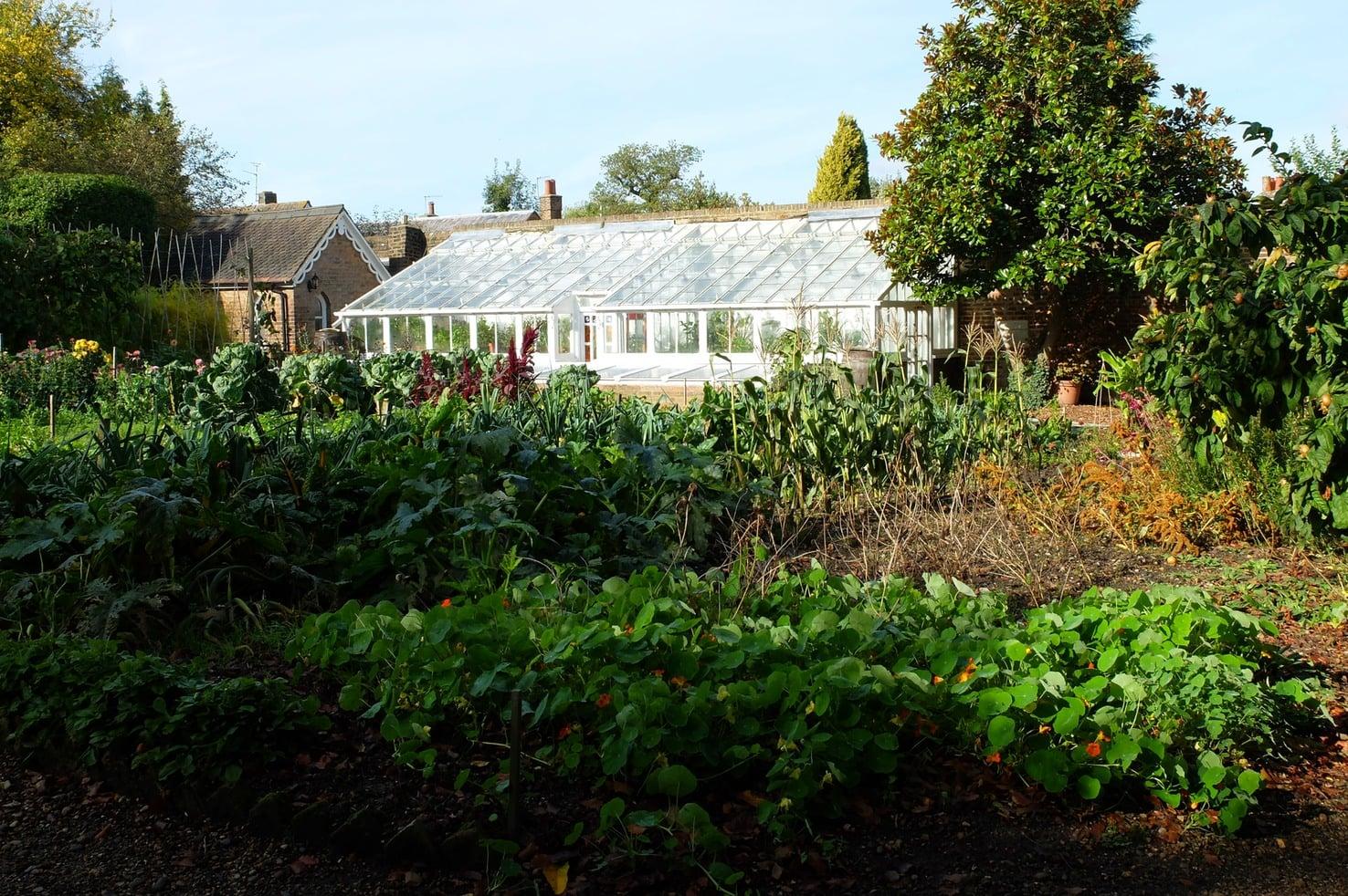The kitchen garden in summer at Reveley Lodge.