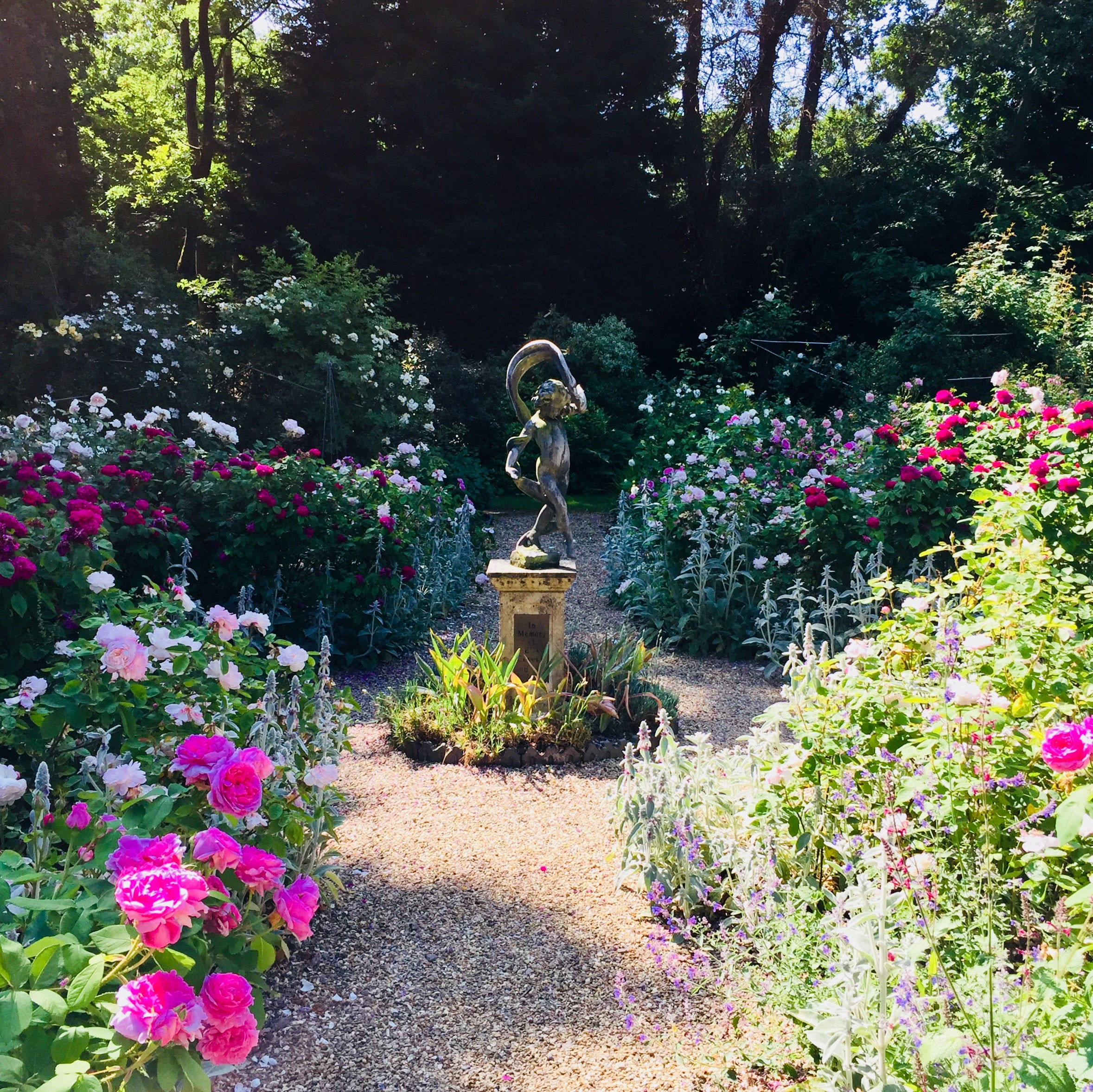 The Rose Garden in bloom at Reveley Lodge.