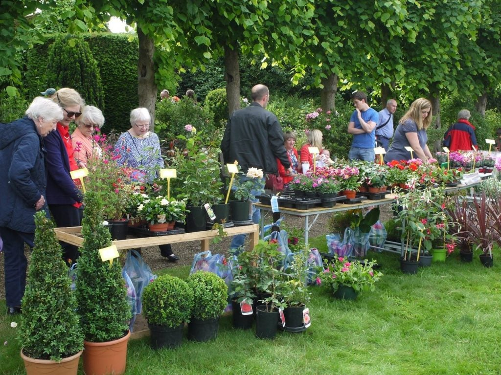 Plant stalls at the National Garden Scheme open day.